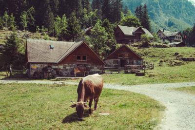 Appenzell02,Wandern, Landschaft, Berge, Kuh